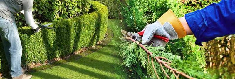 Manutenzione aree verdi scuole a roma for Manutenzione giardini